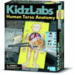 Kidzlabs anatomía torso humano